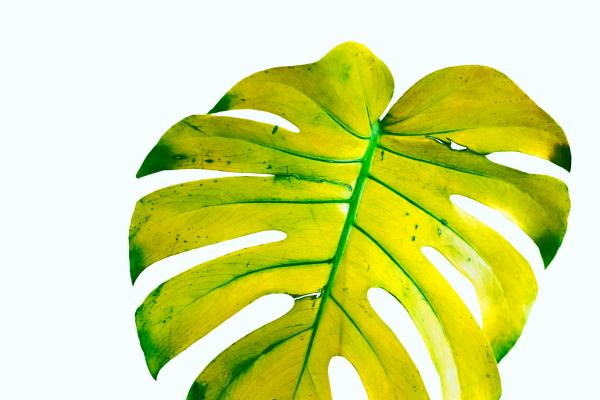 plant_green_cAngelikaSchiemer