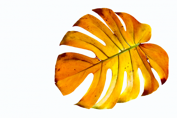 plant_orange_cAngelikaSchiemer