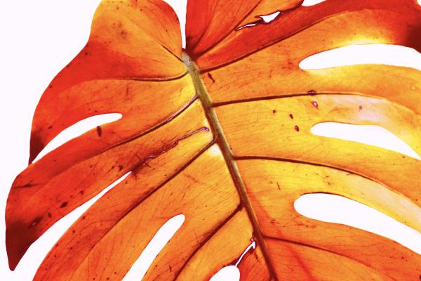 plant_red_cAngelikaSchiemer